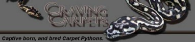 Carpet Pythons