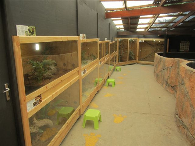 Online reptile shop south africa
